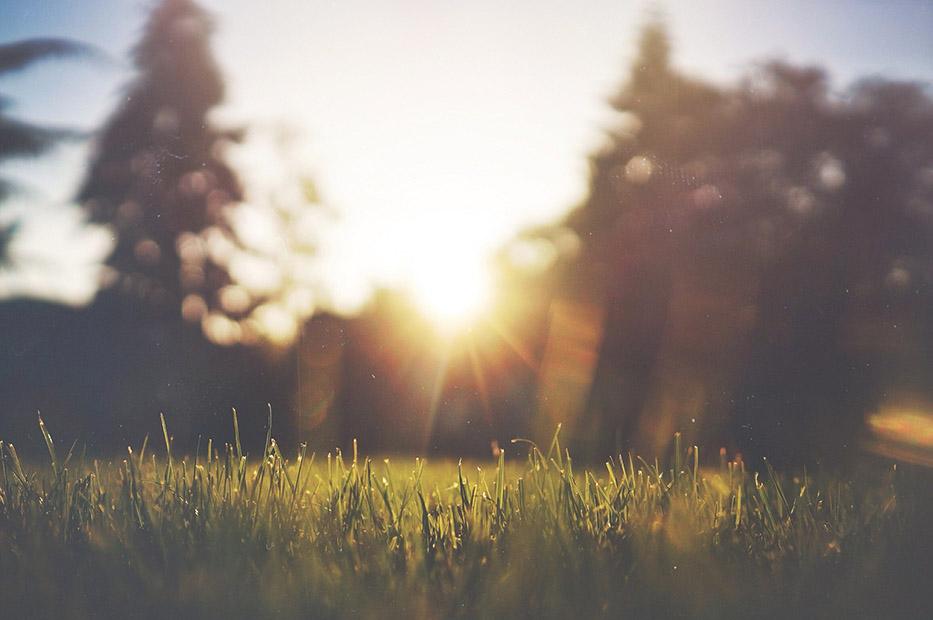 Gress og skog i solnedgang