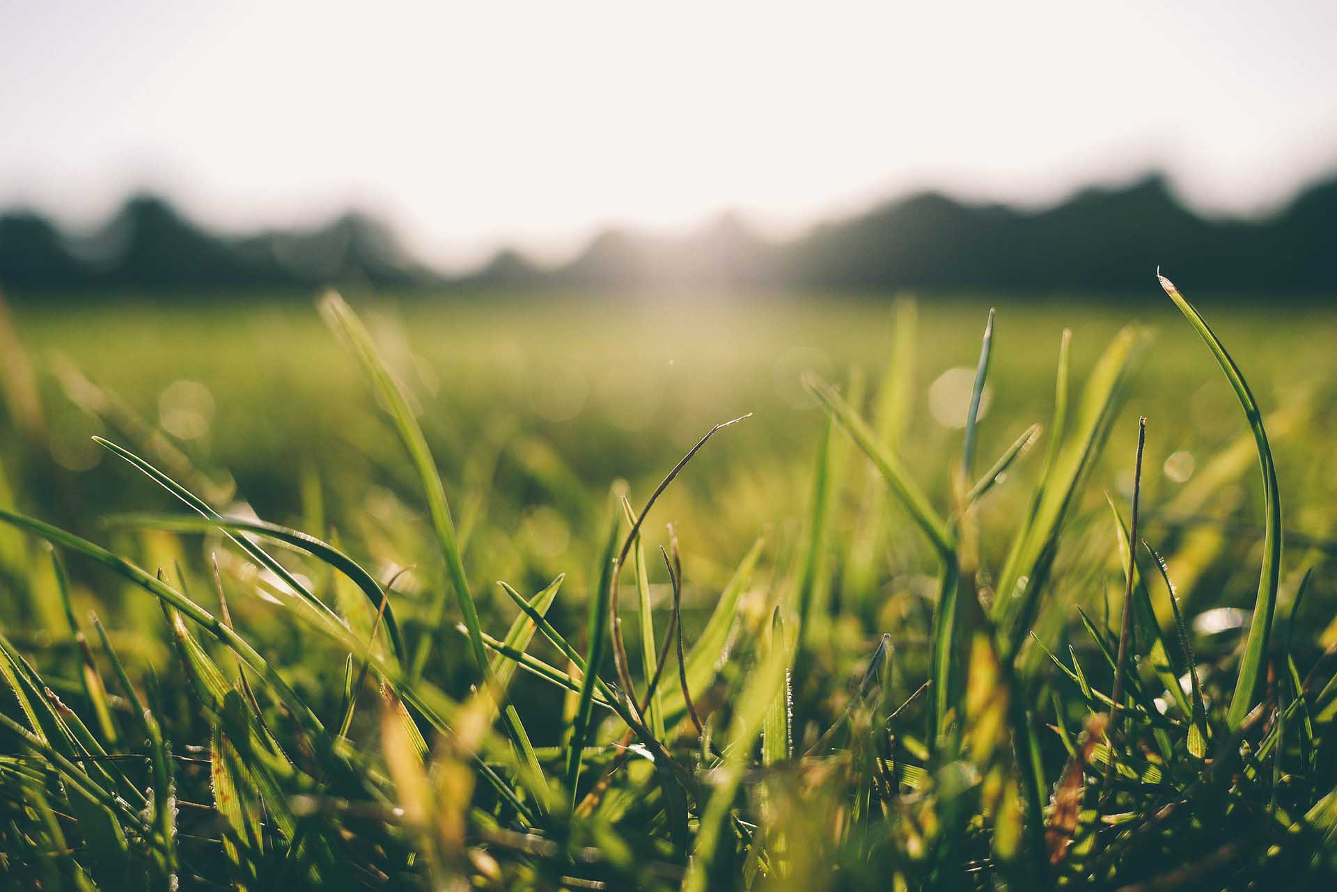 Close-up of grass and sunshine